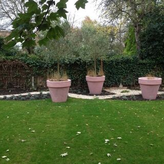Wandsworth Family Garden 9