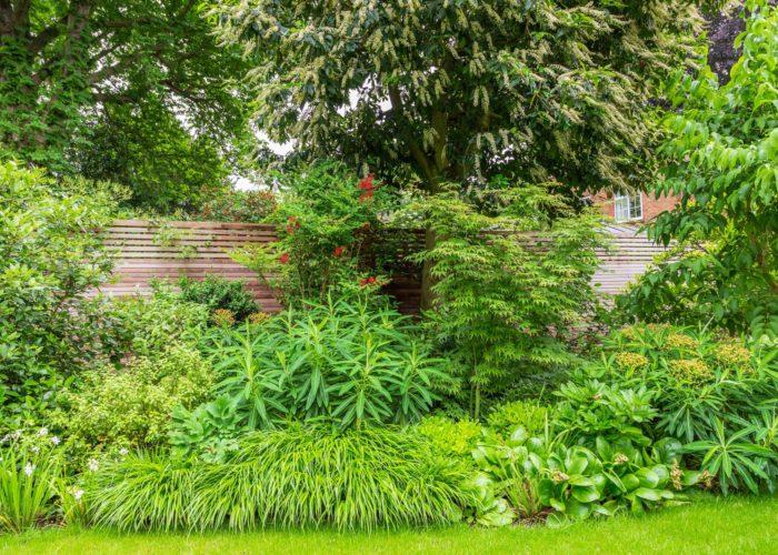 Herbaceous Plants 1