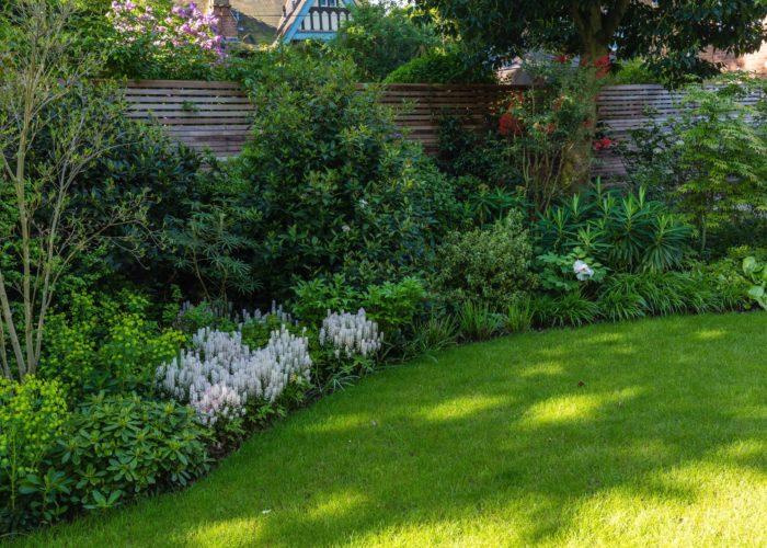 Herbaceous Plants 16