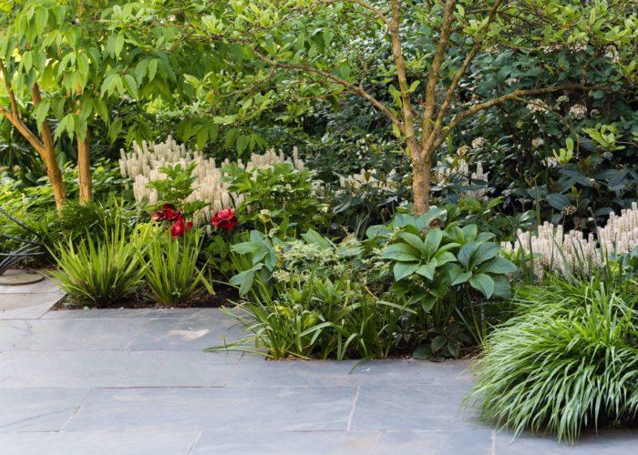 Herbaceous Plants 17