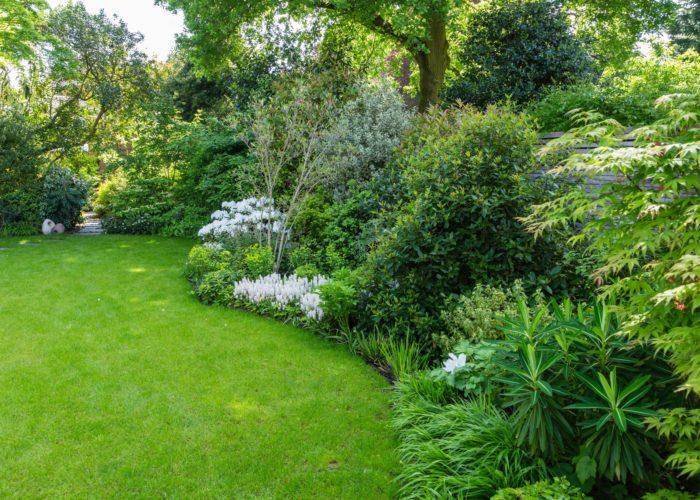 Herbaceous Plants 19