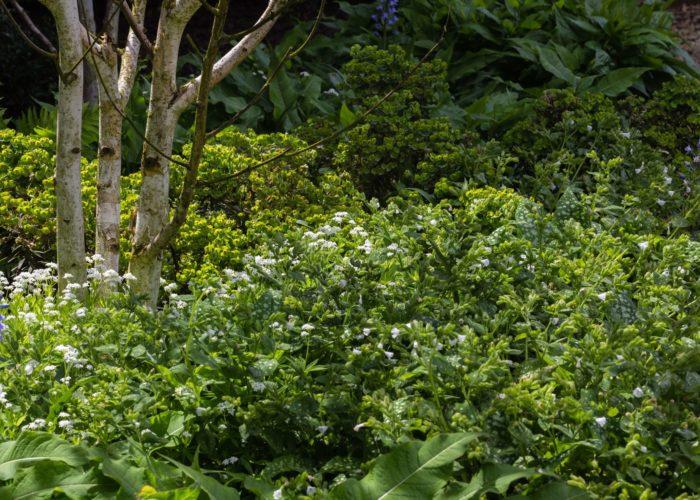 Herbaceous Plants 26