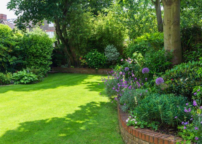 Garden Perennial Plants 1