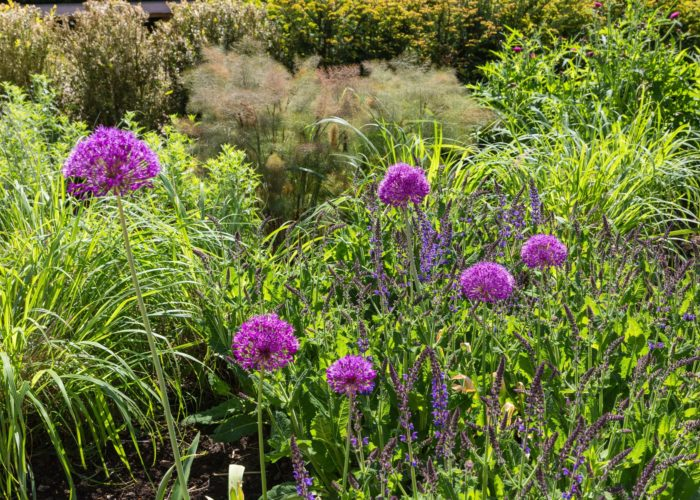Garden Perennial Plants 11