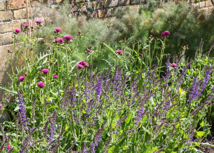 Garden Perennial Plants 12