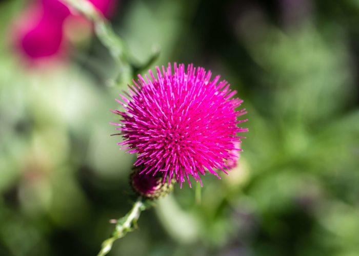 Garden Perennial Plants 13