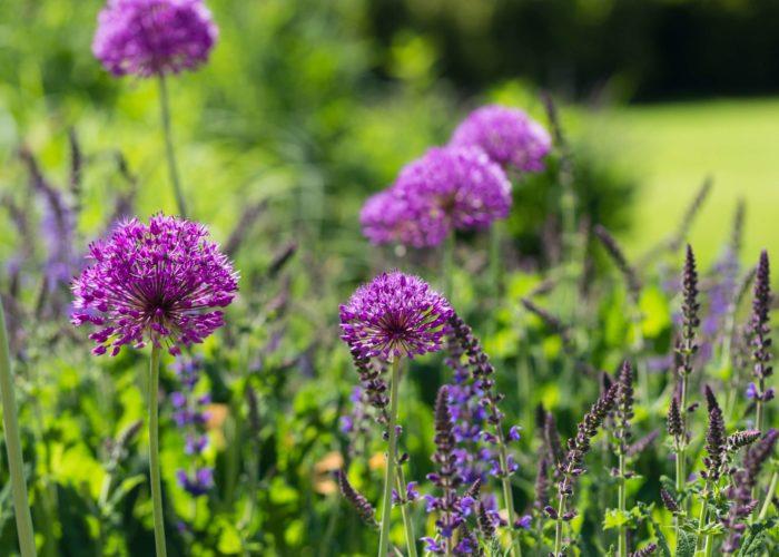 Garden Perennial Plants 14