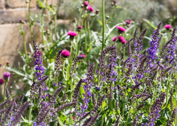 Garden Perennial Plants 15
