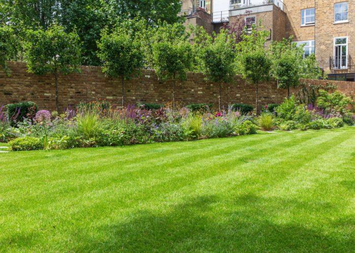 Garden Perennial Plants 2