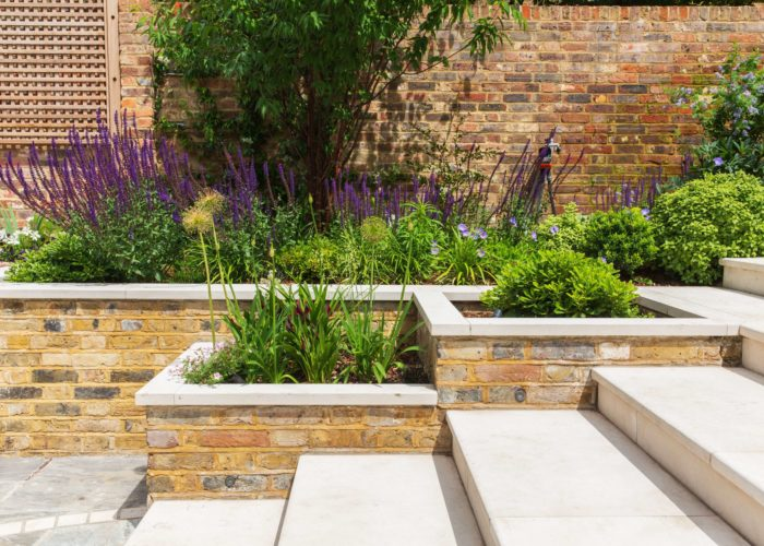 Garden Perennial Plants 4