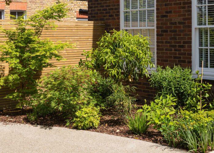 Garden Specimen Shrubs 1