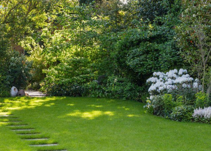 Garden Specimen Shrubs 2