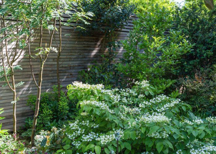 Garden Specimen Shrubs 3
