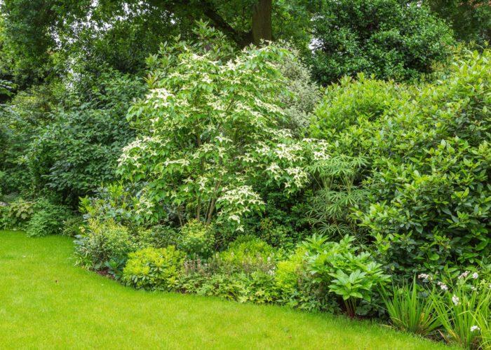 Garden Trees 1