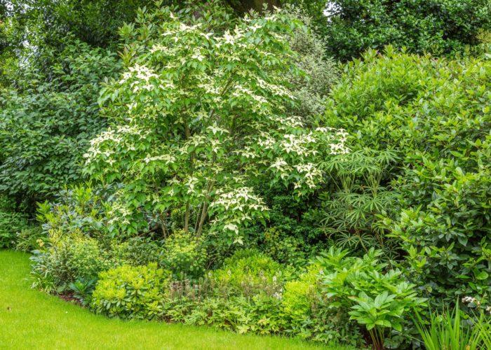 Garden Trees 2