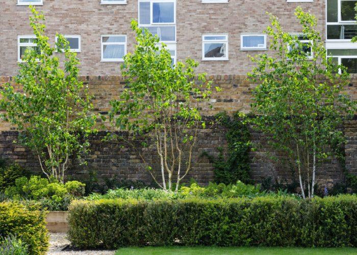 Garden Trees 6